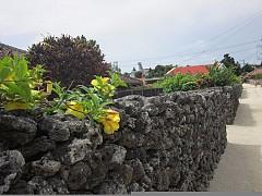 Кораловите огради на о-в Taketomi, Окинава