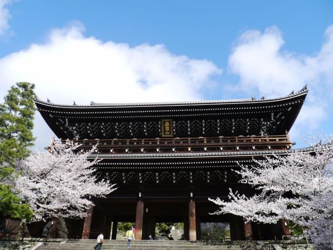 Сакура, Киото