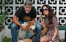 Джордж, Амал и кучетата им