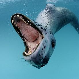 ЛЕОПАРДОВИ ОТПЕЧАТЪЦИ /  Пол Никлин е арктически специалист по екосистеми и морски биолог, който снима за National Geographic. С работата си той има за цел да повишава информираността за полярните екосистеми на планетата.