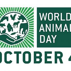 Световният ден на животните е на 4 октомври.  Учени вече установиха, че диви животни като пандите, орагутаните, тигрите и лъвовете може да не оцелеят до 2020 г.  Ако текущата ситуация не се промени, ние рискуваме да изгубим 2/3 от гръбначните животни в следващите 2 години.