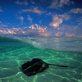 СКАТ /  Давид Дюбиле е един от световноизвестните подводни фотографи, който улавя прекрасни моменти от подводния живот – цветни коралови рифове, големи акули, скатове и много красиви подводни създания.