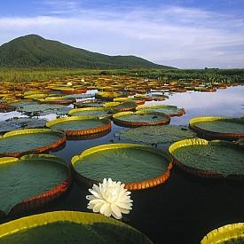 ВЛАЖНИТЕ ЗОНИ ПАНТАНАЛ /  Това е най-голямата влажна зона в света и се разпростира на три държави – Бразилия, Парагвай и Боливия. Благодарение на флората и фауната, тази зона се счита за истинско чудо. Тук са регистрирани 12 под-регионални системи и повече от 3500 растителни вида, 1000 вида птици, включително и редки животни.