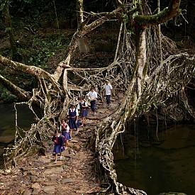 По мост от корени на дървета, Индия