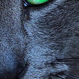 """ФОКУСИРАЙТЕ СЕ ВЪРХУ ТОВА, КОЕТО НАИСТИНА ИСКАТЕ И БЪДЕТЕ НАСТОЯТЕЛНИ, ДОКАТО НЕ ГО ПОЛУЧИТЕ.  Опцията """"не"""" не съществува. Гладни сте, значи трябва да бъдете нахранени. Ако товеа не се случи, котката ще намери начин да ви """"отмъсти"""". Ако не й смените пясъчника за тоалетна, тя ще започне да изхожда около него. Ако не й отворите варатата на терасата, за да се наслаждава на слънцето... Е, въображението й е безкрайно. Вършете необходимото, за да получите това, което искате и не се притеснявайте да опирате до помощта на другите."""