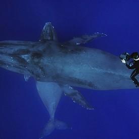 КИТ И ГМУРКАЧ /  Подводният фотограф Флип Никлин има богат опит в подводната фотография, като за първите му стъпки е помогнал баща му. Тази снимка доказва опита му.