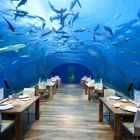 РЕСТОРАНТ ITHAA, КУРОРТ CONRAD MALDIVES RANGALI ISLAND HOTEL, МАЛДИВИ: Желаещите да стигнат до Итаа - ресторант на дълбочина 5 метра в близост до един от двата частни острова на курорта Conrad Maldives Rangali Island Hotel, стават все повече и повече. Залата е проектирана само за 14 места. Покривът и стените са абсолютно прозрачни, така че гледката е впечатляваща.