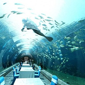 РЕСТОРАНТ В ОКЕАНАРИУМ, САНЯ, КИТАЙ: Саня е град в южната част на китайския остров Хайнан, известен със своите живописни заливи, заливи и морски курорти. Когато пътувате на тези места, не забравяйте да посетите океанариума. Това е истински подводен рай за деца и възрастни. В естественото местообитание можете да видите няколкостотин вида риби и други подводни обитатели.