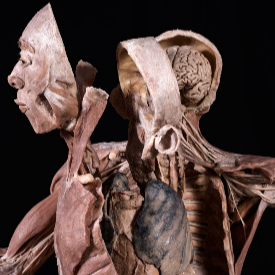 Човешки органи на изложба в София