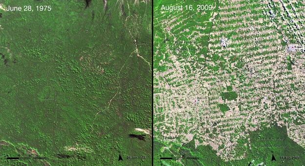 Дъждовните гори в Бразилия отсечени за създаването на...