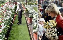 В Лондон създадоха най-красивата градина в памет на Даяна
