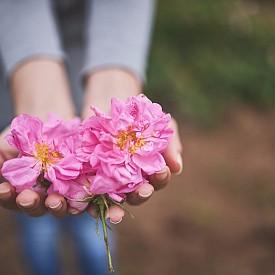 Живот в розово