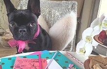 Кучето на Лейди Гага - рекламно лице на Coach