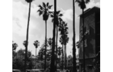 """Емблематичната фасада на хотел """"Бевърли Хилс"""" с палмовите дръвчета, запазени и до днес"""