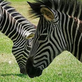 Снимка от Замбия