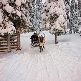 Дори и да не карате ски или да не практикувате нхикакъв зимен спорт, в Рука няма да ви е скучно - разходките са едно от най-вълнуващите неща, които могат да ви се случат. Освен в еленски впряг, може да се разходите и с моторна шейна.