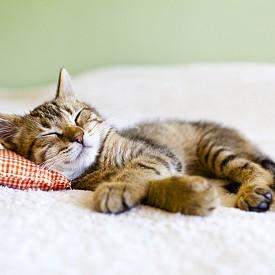 Дева: 4 часа сутринта - Девата може да се съвземе само за три часа, така че те да могат да си легнат в ранни зори и да имат енергията за срещата си в 8 часа сутринта.