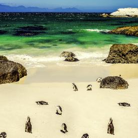 Болдърс, Кейптаун