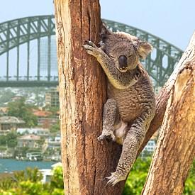 13 място: Сидни, Австралия