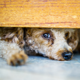 Британският посланик у нас застана до БГ звезди в кампанията срещу експерименти с животни