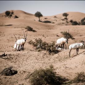 7 причини да се откажете от Дубай в полза на Рас ал-Хайма