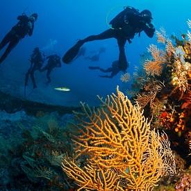 Кристално чистите води и красивият подводен свят край третия ръкав на Халкидики.