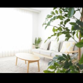 5 лесни правила за чист въздух у дома