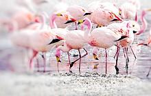 Фламингото е сред малкото животински видове наоколо.