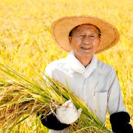 Факти, легенди и цифри за ориза