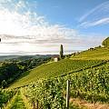 Виното и неговите топ дестинации: Италия