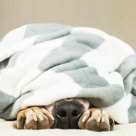 Рак: 11 часа - Домошарът Рак се нуждае от продължителен сън и най-малко - осем часа суетене в леглото, за да се чувстват спокойни. Това означава, че ракът трябва да се оттегля в сънищата до 11 часа най-късно.