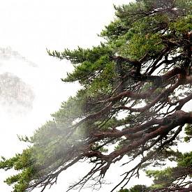 Красивата област Гангуон, през която минава границата между Северна и Южна Корея.