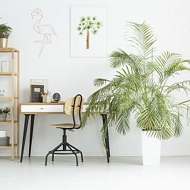 Кабинет: растението, което ще поглъща електромагнитните излъчвания на компютъра, е кактус, а с ксилена, който се отделя от принтерите, идеално ще се справи бостънската папрат.