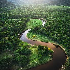 Учените сметнаха колко дървета трябва да се засадят, за да се спаси планетата