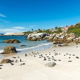 Плажът Боулдър, където можете да видите и пингвини