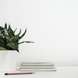 Сансевиерия е истински експерт в пречистването на въздуха и запълването с кислород. Поливайте я на всеки няколко седмици и внимавайте да не прекалявате с количеството вода, особено през зимата. Сансевиерията предпочита индиректната светлина, но, като цяло е трудно да се направи нещо нередно по отношение на това растение.
