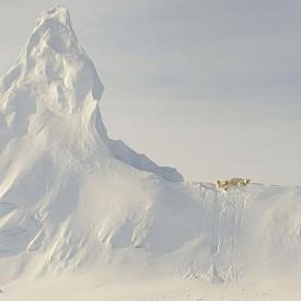 """Почетна награда, Природа - """"Bears On A Berg"""",  Нунавут, Канада"""
