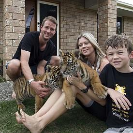 """""""Домашни тигри"""" е хроника за Спот и Страйп, две тигърчета, които един ден ще влязат в програма за възпроизводство. На 4 октомври Viasat Nature подкрепя с програмата си мисията на World Animal Day, който е да подобри съществуването на животните по целия свят."""
