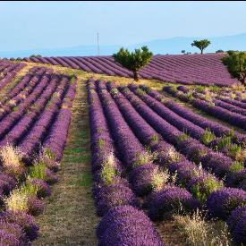 Прованс, Южна Франция