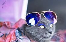 Глем котка в Instagram