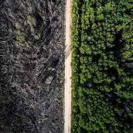 Път разделя опожарената част от зелената.