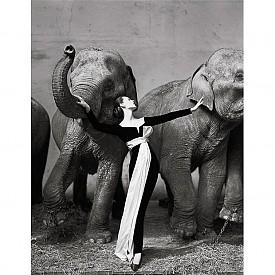 """Ричард Аведон """"Довима и слонове"""" (1955 г.) $ 1 151 976"""