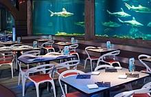 РЕСТОРАНТ SHARKS UNDERWATER GRILL, ОРЛАНДО, ФЛОРИДА, САЩ: Идеален за тези, които обичат да гъделичкат нервите си - вечеря с акули в ресторанта Sharks Underwater Grill в Орландо. Ще трябва да вкусите ястията като периодично забелязвате в непосредствена близост до вас страшни челюсти и перки. Само много смели и ... гладни хора могат да издържат на такъв стрес! Менюто, разбира се, е с морски дарове.