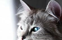 Ден на котката