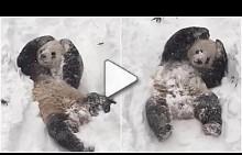 Пандата Тян Тян за първи път вижда сняг